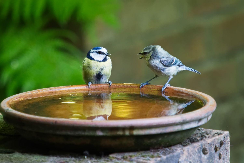 Desain Taman Rumah Sederhana Dengan Bak Mandi Burung