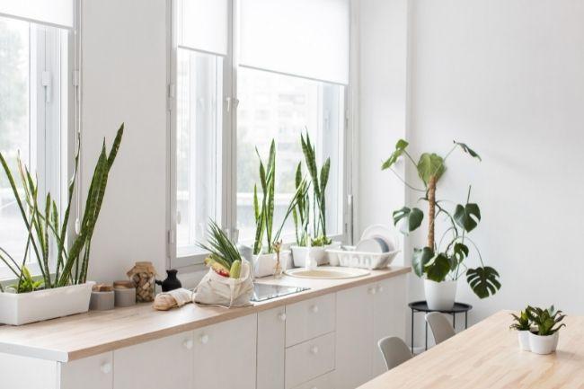 Dapur Minimalis Dengan Tanaman Hias