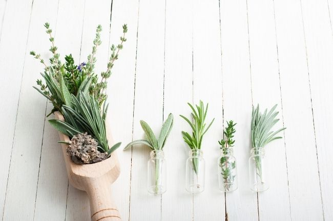 Jenis Tanaman Herbal